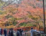河鹿橋Vol33.jpg
