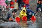 清流祭り2.jpg