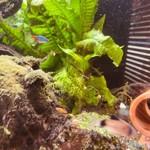 熱帯魚1.jpg