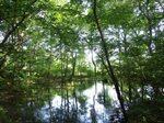 自然園—ミズスマシの池.jpg