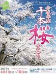 赤城千本桜まつり.jpg