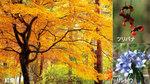赤城自然園の紅葉.jpg