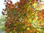 赤城自然園の紅葉1.jpg