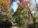 赤城自然園の紅葉2.jpg