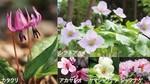 赤城自然園春の開園.jpg