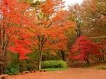 赤城自然園紅葉1.jpg