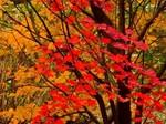 赤城自然園紅葉2.jpg