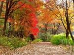 赤城自然園紅葉3.jpg