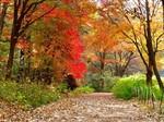 赤城自然園紅葉4.jpg