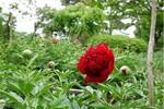 赤城自然園1.jpg