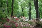 赤城自然園2.jpg