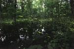 赤城自然園3.jpg