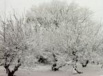 雪20120120-2.jpg
