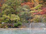 露天風呂よりの紅葉.jpg