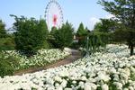 skylandpark_anaberu.jpg