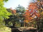 uenoyamakouen.jpg
